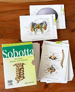 Die Sobotta Lernkarten Knochen, Bänder und Gelenke eignen sich für die Vorbereitung auf mündliche und schriftliche Anatomieprüfungen.